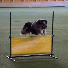 kurz-poslusnost-pes-zkouska