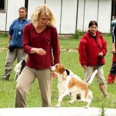 letni-psi-rodinny-tabor-dovolena-se-psem