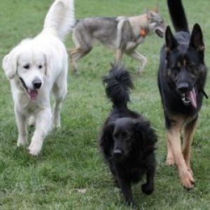 psi-tabor-letni-tyden-vylety-socializace