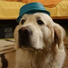 trickdog-psi-triky