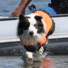 vodni-prace-vodni-zachranarina-psi-tabor-dovolena-se-psem
