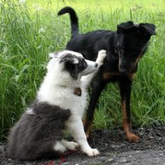 vikend-kurz-pro-problemove-psy-aneb-budte-psovi-dobrym-sefem-agrese-dominance-neposlusnost